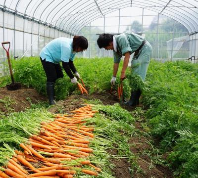 「アゲインファーム」農業の魅力|栽培や収穫に携わることで、忍耐力が身に付きます