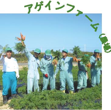 アゲインファーム(農場)|広々とした農場で のびのび作業したい方に|就労継続支援B型